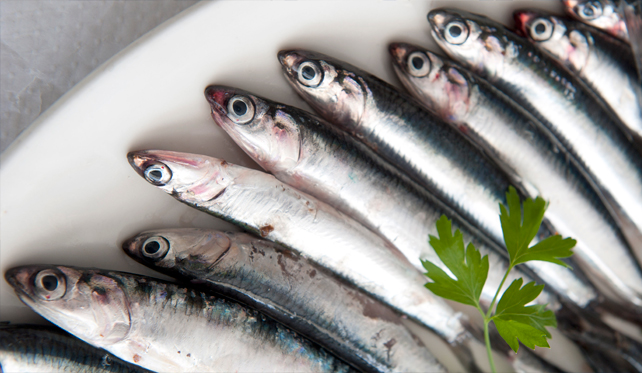 2017: the year of Spanish anchovy