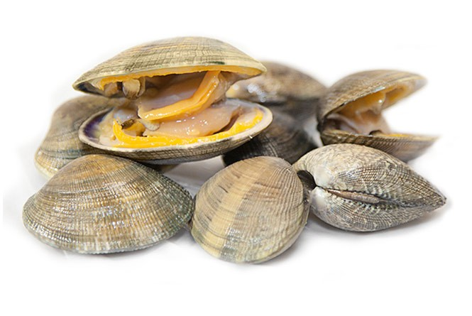 The 4 types of clams cultivated in Galicia
