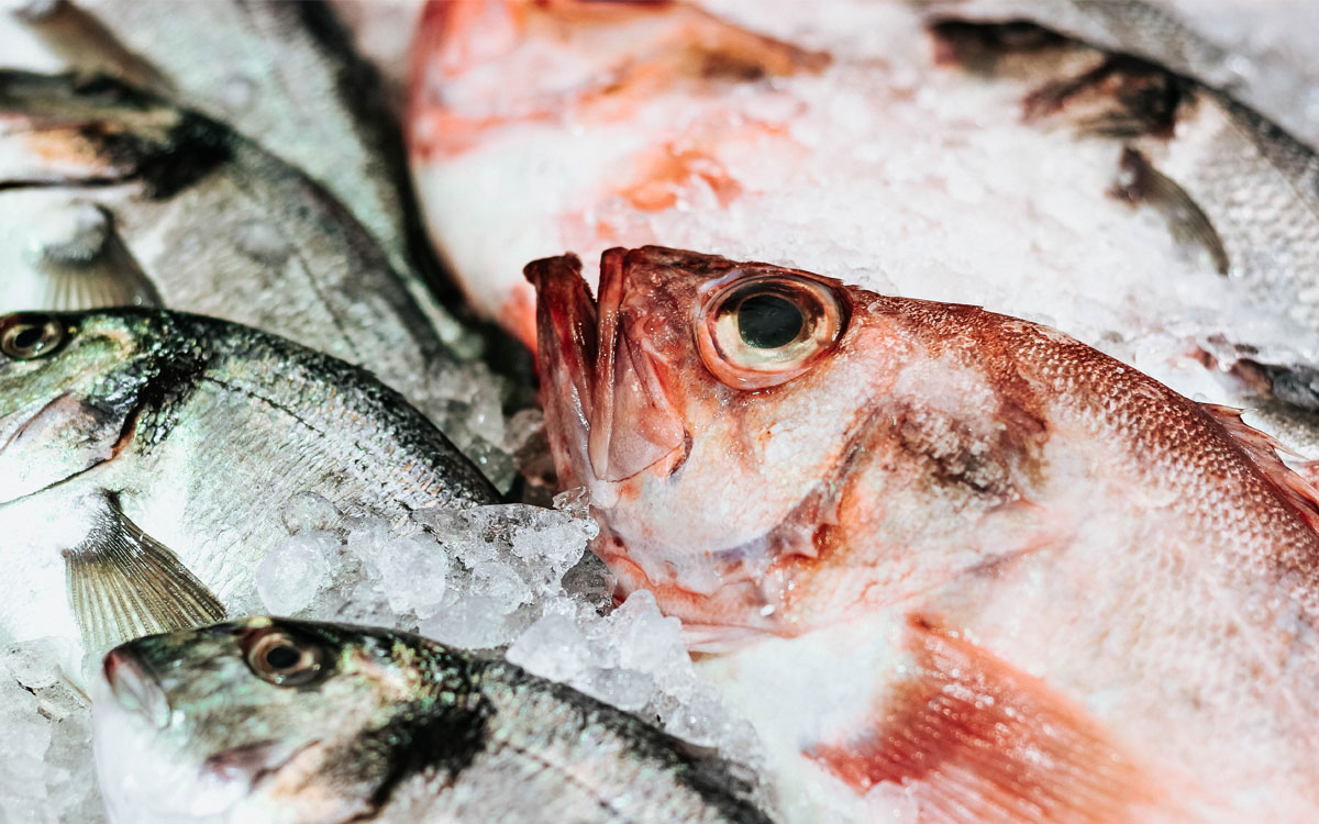 Benefits of fish and shellfish consumption according to the European Food Safety Agency (EFSA)